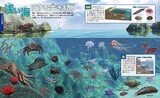 浅い海のすむ生きもの